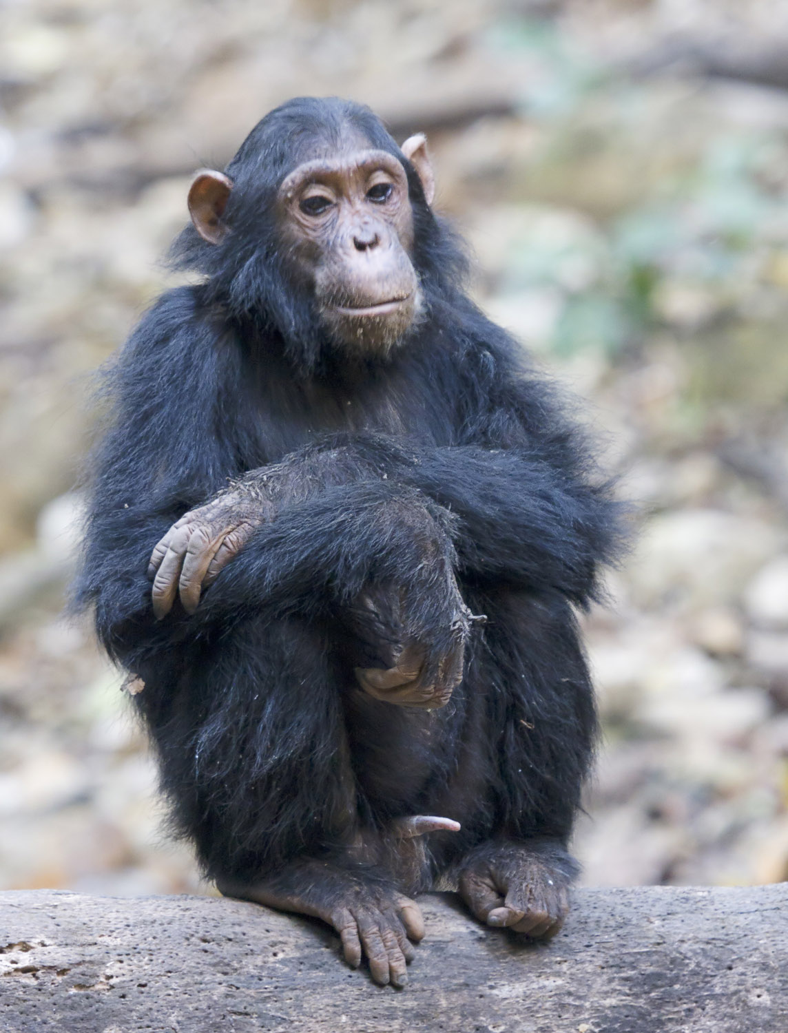 Meet the Family: Investigating Primate Relationships Images