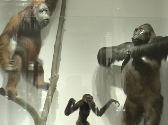 Meet the Family: Investigating Primate Relationships